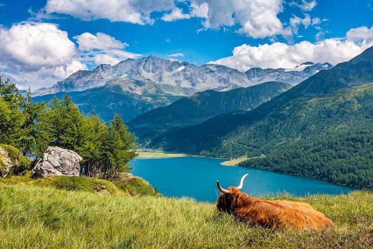 Tolligriita Graubünden Datingseite